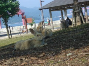 ookunojima2.jpg