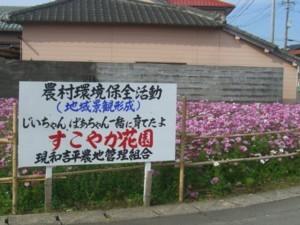 tanega  kosumosu 2.jpg